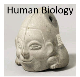 human biology course icon